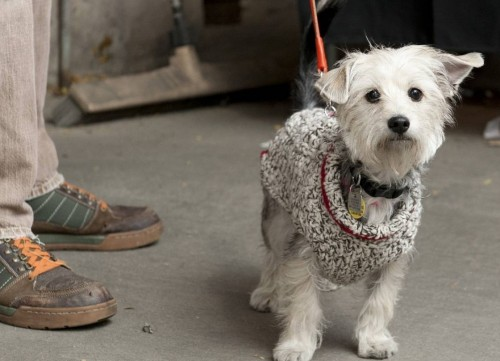 Dogs of the Vintage Garage. This is Charlie.