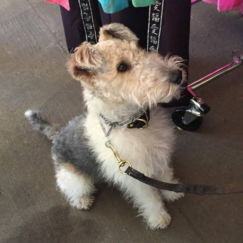 Dogs of Chicago stand at attention at Vintage Garage