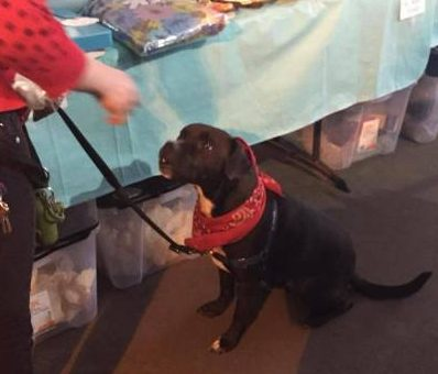 Dogs of Chicago get treats at the Vintage Garage