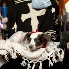 Dogs of Vintage Garage Chicago, some of our favorite customers!