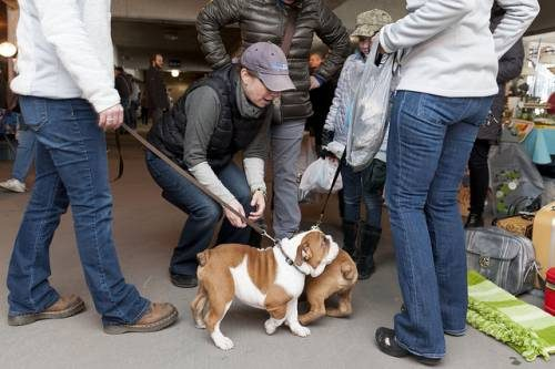 Dogs of Chicago make friends at Vintage Garage