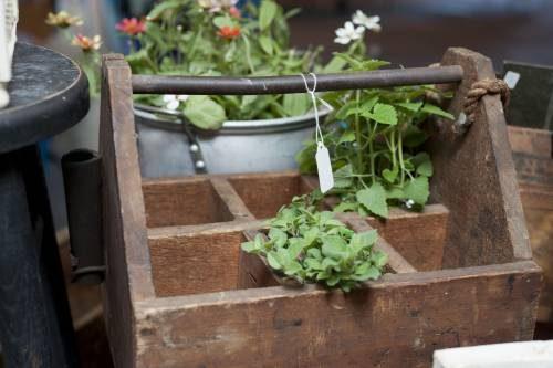 Vintage houseplants are coming back! Find terrariums and plants at Vintage Garage Chicago. Part of the 2016 vintage design trends